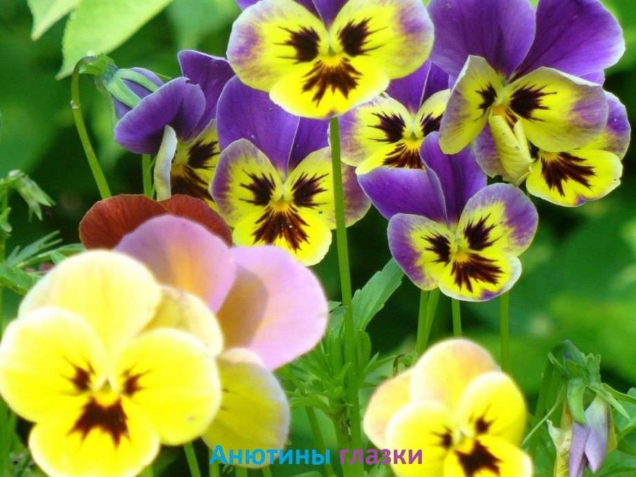 Подборка фото: красивые цветы с названиями — Общенет